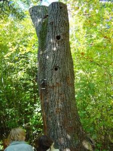 Arboretum du vallon de l 39 aubonne - Tronc d arbre artificiel ...