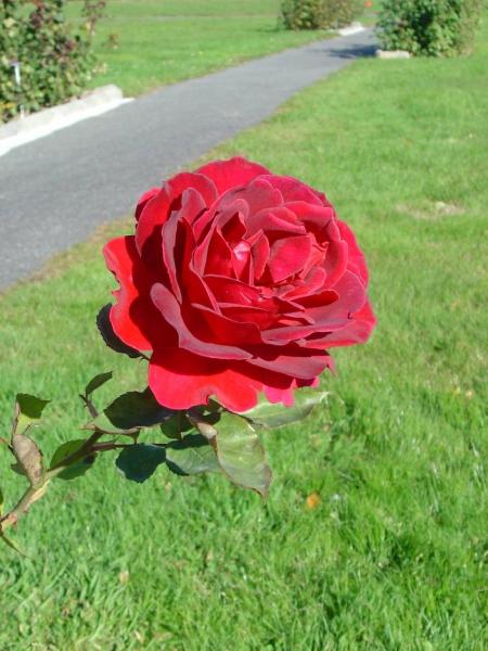 Signal de bougy for Le jardin morat